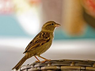 Sparrows | by Erman Peremeci