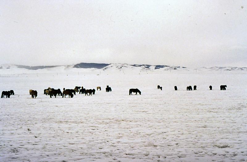 MONGOLIA 1994 01-0026