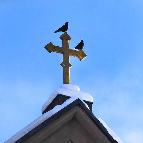 winter church birds snow sun shadows badreichenhall jackdows corvusmonedula