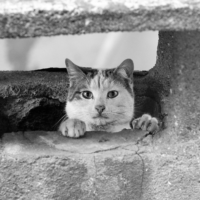 Kitty in a chimney