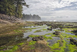 Bright green algae on the rock flats of Botanical Beach.