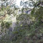 04 Viajefilos en Australia. Wollomombi 03