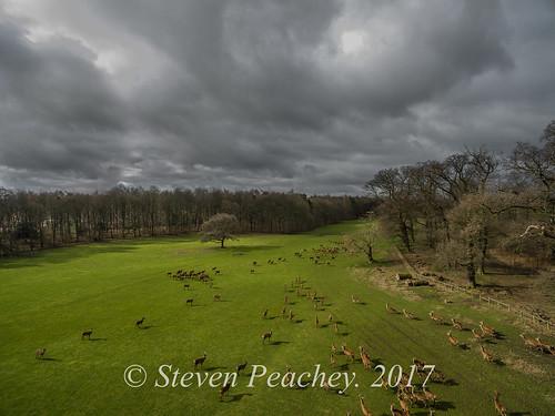 staindrop england unitedkingdom drone aerial dji djiphantom3advanced p3a deer landscape sky clouds trees rabycastle stevenpeachey lightroom reddeer fallowdeer countydurham castle