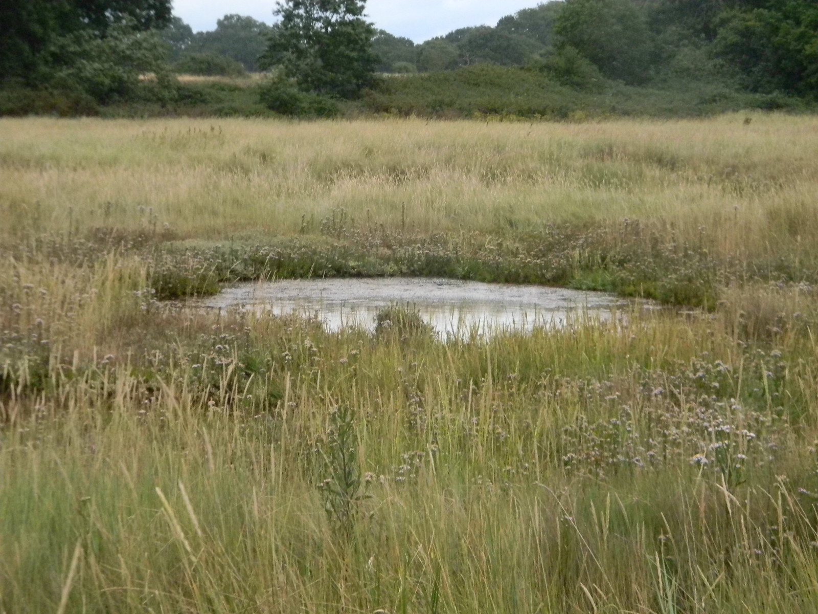 pond in the marsh Chichester to West Wittering