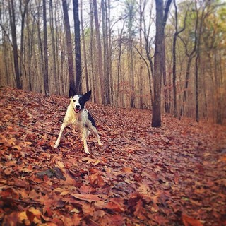 Had a nice visit to our home away from home. #hike #Chattahoochee | by aussomedogs