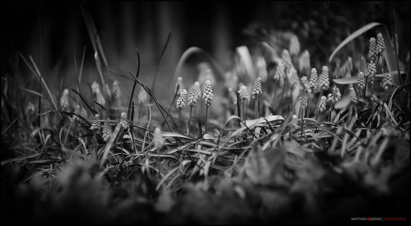 Leica Summarit 50mm f1.5