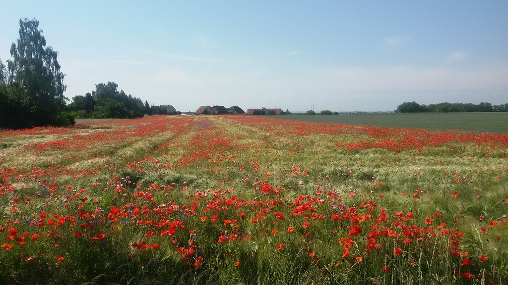 """""""Droga""""- Pierwszy polski audiobook o Camino: Dni 26-28, Niemcy"""