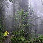 07 Viajefilos en Australia. Dorrigo Rainforest NP 33