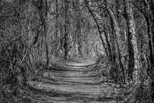 dxofilmpack5 perfecteffects17 on1photoraw2017 blackandwhite woods oxleynaturecenter tulsa trail trees d610 tamron70300vc nik viveza