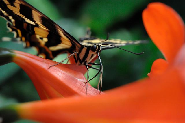 Papillons en Liberté 2017 - Photo 13