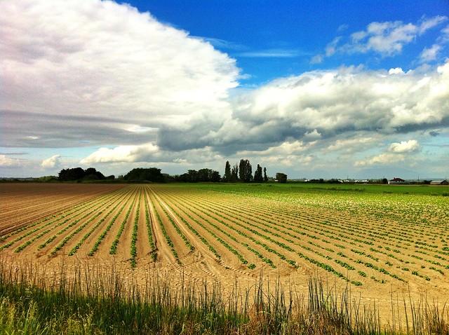 Farm Country in Delta