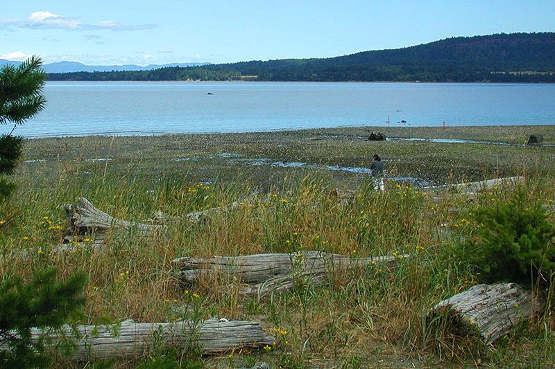 Fillongley Park, Denman Island, Gulf islands, British Columbia, Canada