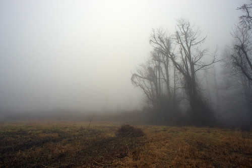 autumn trees mist fog nebel northcarolina