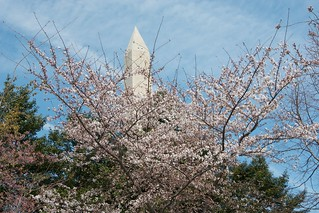 Cherry Blossoms in Washington DC | by Mike Bowler