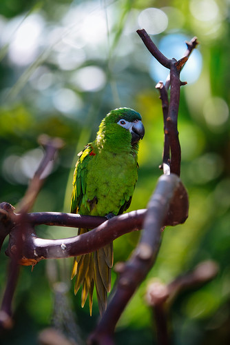 Polly Wanna Cracker? | by MikeBrowne