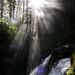 Post-Photosynthesising & Olympics Hike