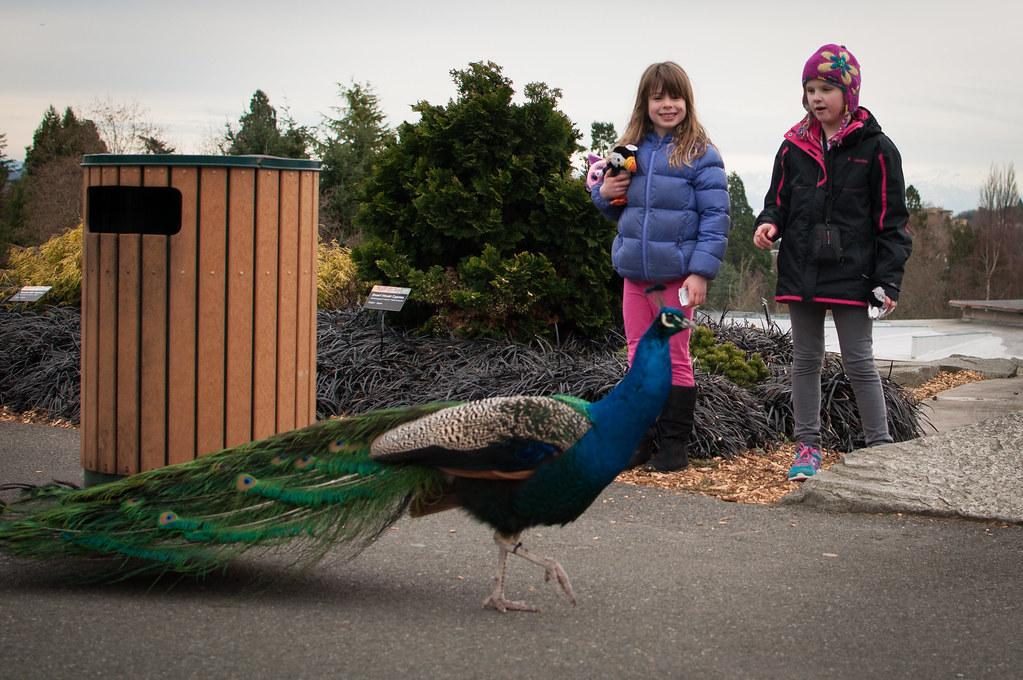 Oh Hello Peacock
