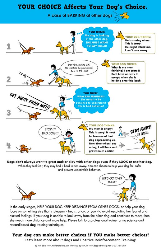 YOUR CHOICE AFFECTS YOUR DOG'S CHOICE: Barking at dogs.
