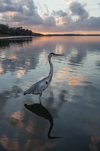 sunset sun bird sc heron clouds reflections wintersolstice greatblueheron lowcountry colletonriver photobomb