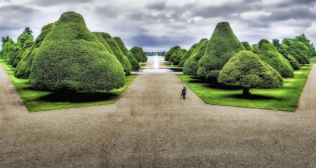 Hampton Court Trees