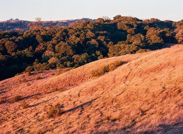 Golden State Sunrise