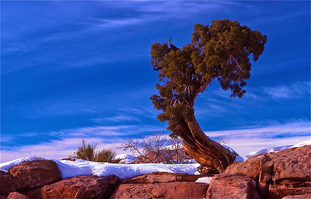 red rock canyon las vegas - Arizona - USA -1991 (Time Travel) Ektachrome 64 scanned