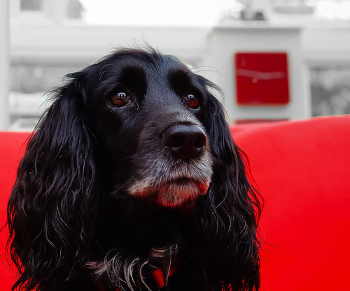Ruby (Explored) | by Bev Goodwin