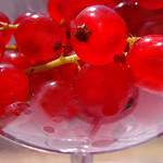 red currant#2