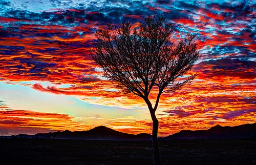 tonemapped sunset weather tree silouette orange red sky northridge porterranch usa losangeles california cloud clouds