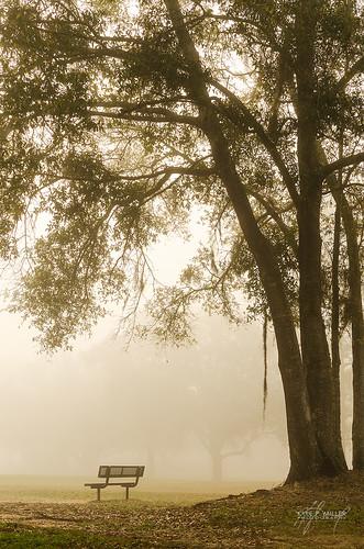 park morning trees tree fog sunrise unitedstates florida foggy tallahassee tombrownpark tombrown