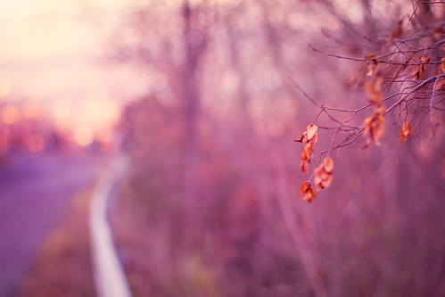 street pink winter italy leaves foglie canon vintage way landscape 50mm countryside strada bokeh country rosa dry campagna tones muted 马路 意大利 rieti 粉红色 550d 下午