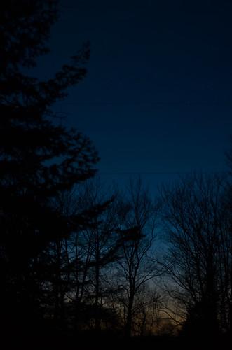 blue trees sunset sky orange black silhouette pine night landscape evening