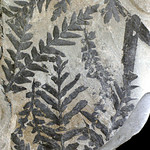 Tue, 05/27/2014 - 9:40am - paleobotany