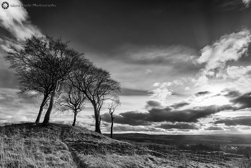 bernacer sep silent eagle photography canon canoneos5dmarkiii copthill sevensisters northeast bw monochrome trees sky sunray clouds plants outdoor weather silenteagle09 iso50