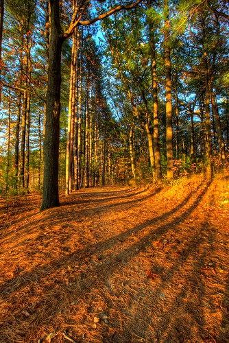 light fall landscape woods shadows massachusetts foliage fells hdr stas burdan