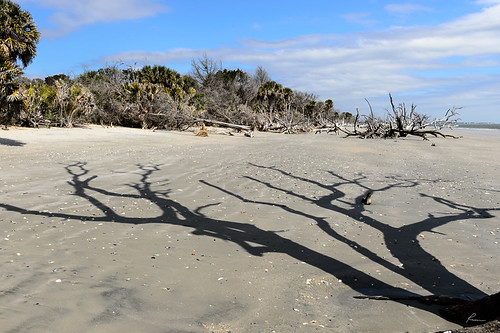 boneyard botanybayplantation driftwood edisto edistoisland places shadow southcarolina trees flickr