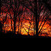 world on fire by RubyT (I come here for cameraderie!)