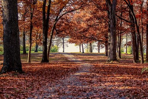 november lake fall illinois maple 2013