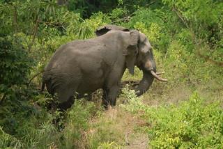 DSC03212-PMB Elefant (Lake Manyara NP)