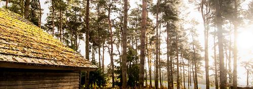 morning sunrise woodland lodge