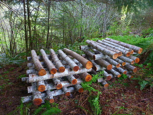 shiitake logs | by red alder ranch