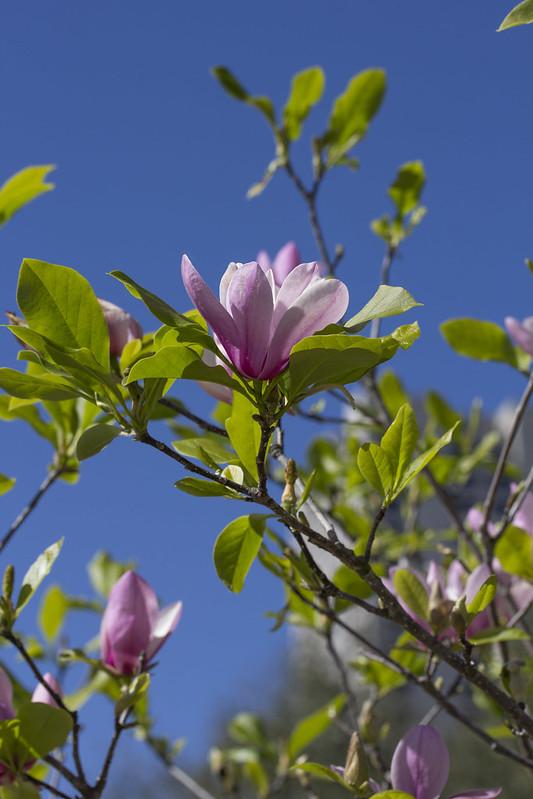 McGovern Centennial Gardens_24