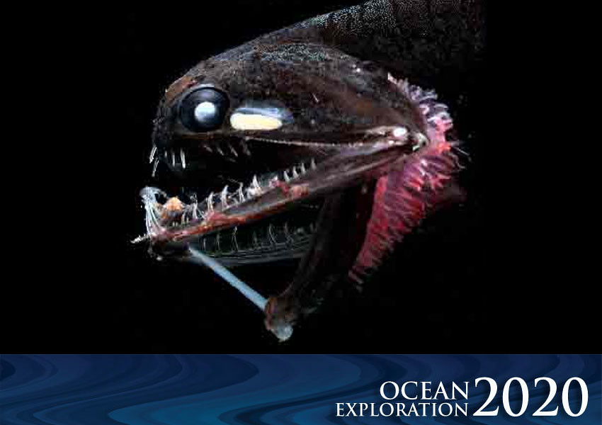 Ocean Exploration 2020: Deep-sea Fish | Did you know that ...
