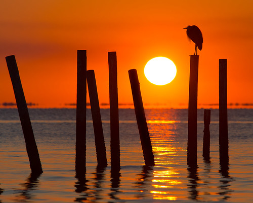 travel sunset red orange bird heron nature water reflections pier al travels decay south alabama daphne traveling mobilebay travelphotography