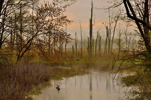 fog newjersey outdoor nj greatswamp greatswampnationalwildliferefuge hardingtownship greatswampnwr