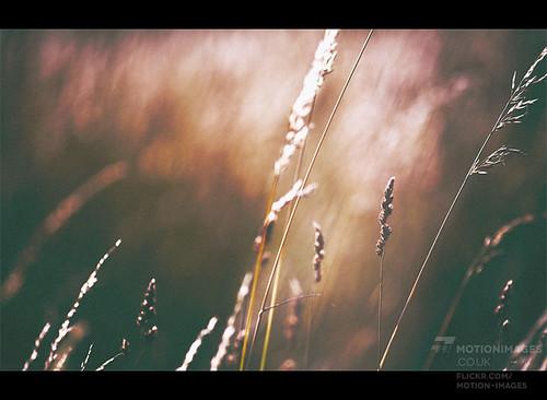Autumn Sun - 0119 | by motion-images