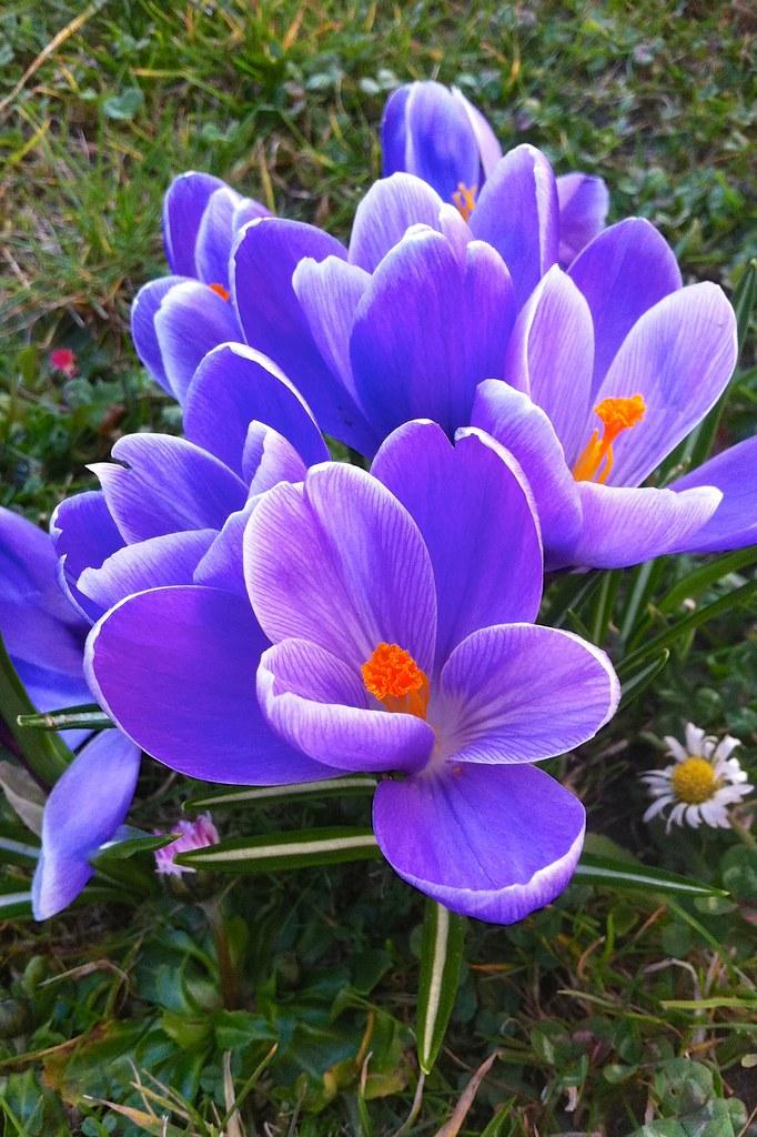72/365: Garden-variety flowers