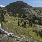 Glacier Lily meadows