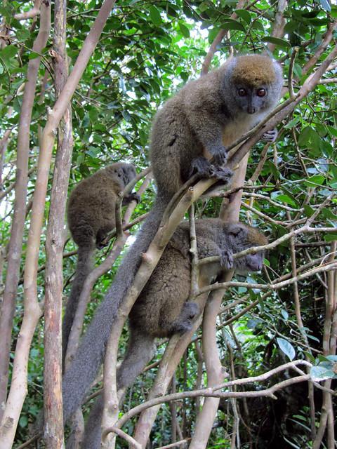 Madagascar3 - 089