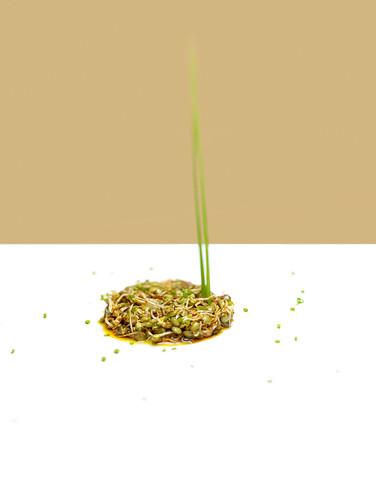 lentilles vertes   by studio mixture